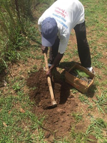 Man graaft gat voor dennenboompje met een hak