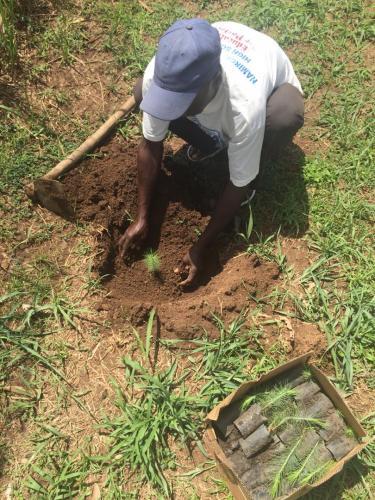Man plant dennenboompje op de Unity School